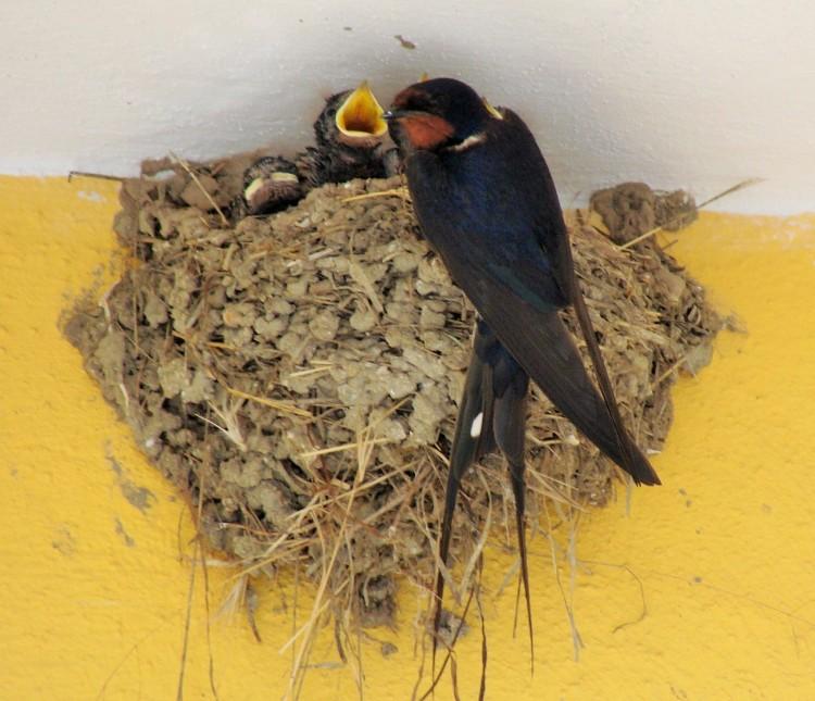 Vogel Junge