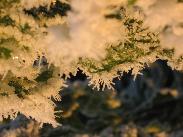Zweig Schnee