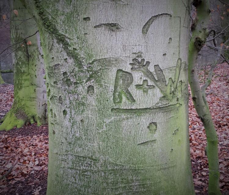 Baum Inschrift