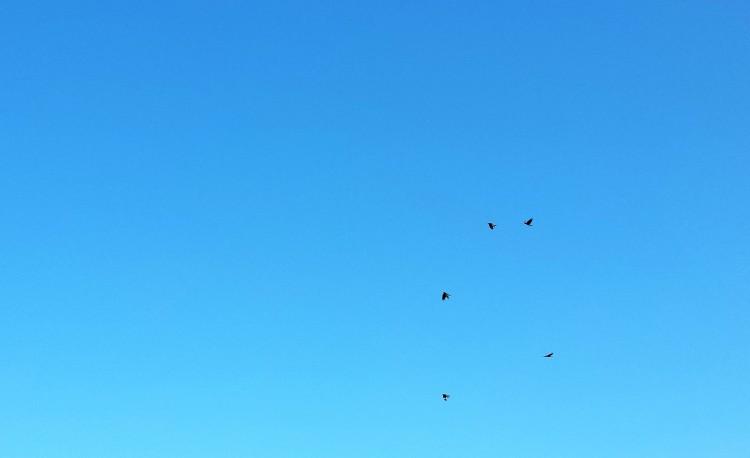Himmel Vögel
