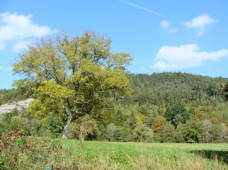 Baum Landschaft