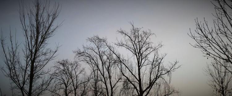 Baum blattlos