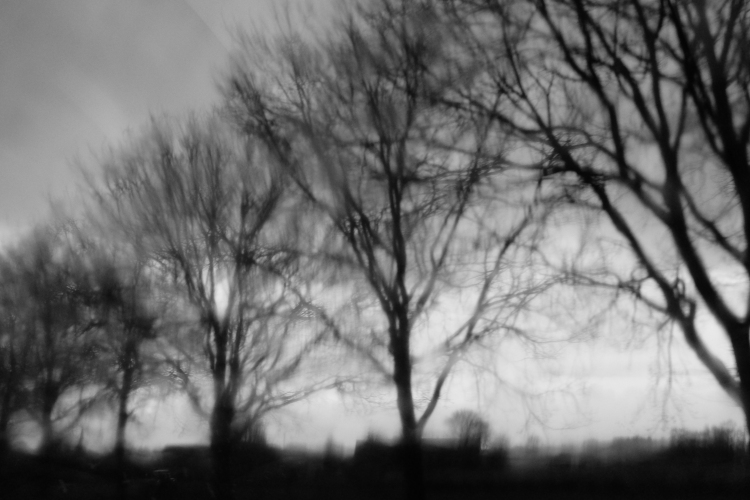 Bäume Zug