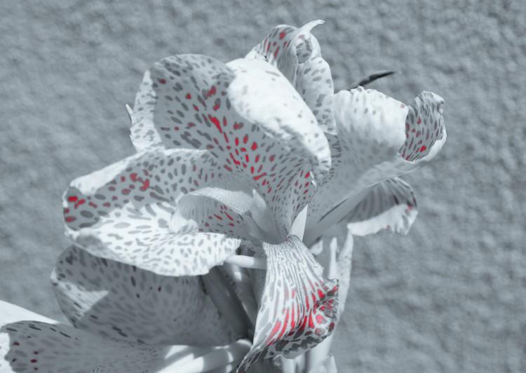 Blüte weiß Sprenkler