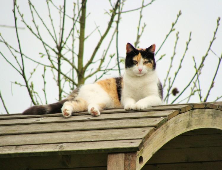 Katze Dach