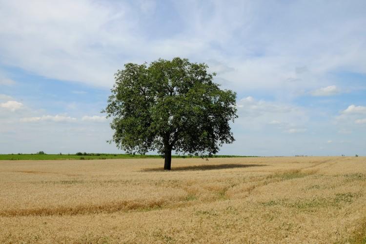 Baum Feld