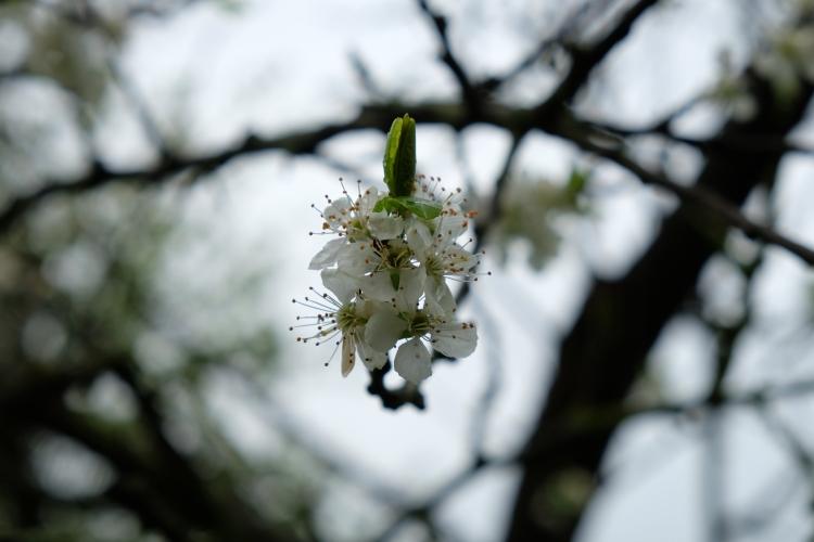 Blüte April