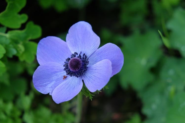 Blume Mai