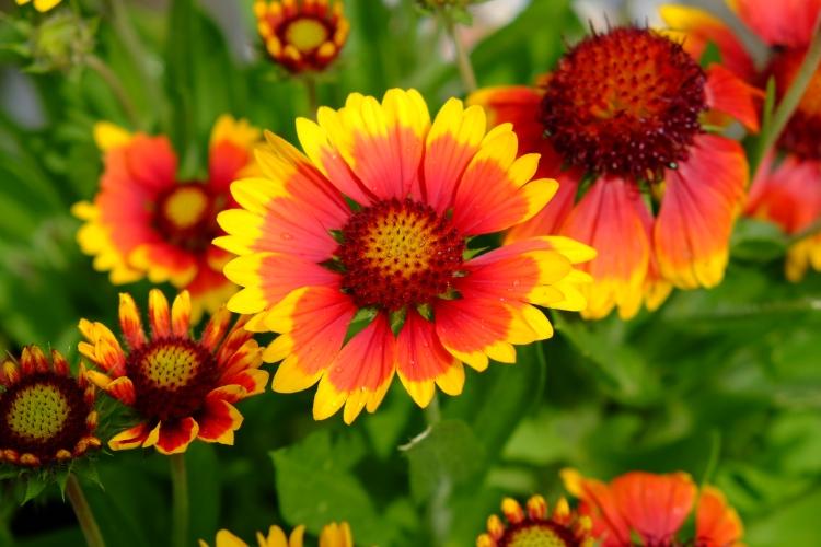 Blume Garten.JPG