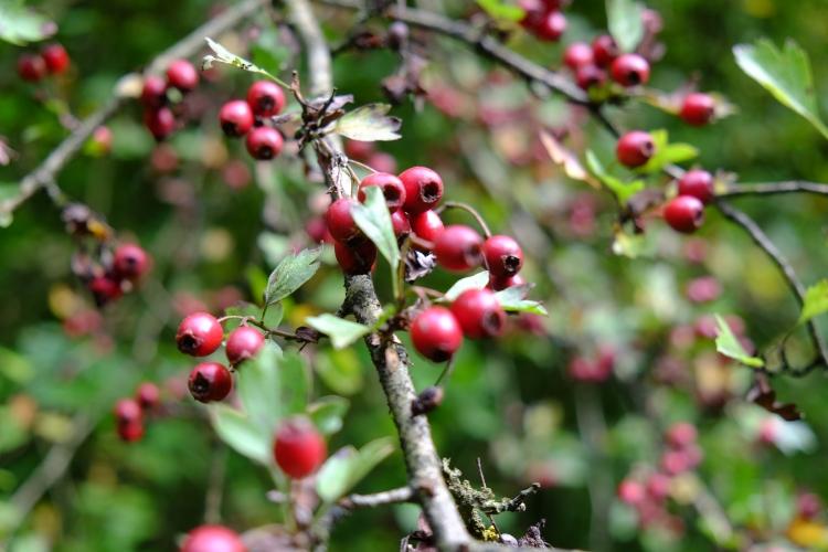 fruchte-rot