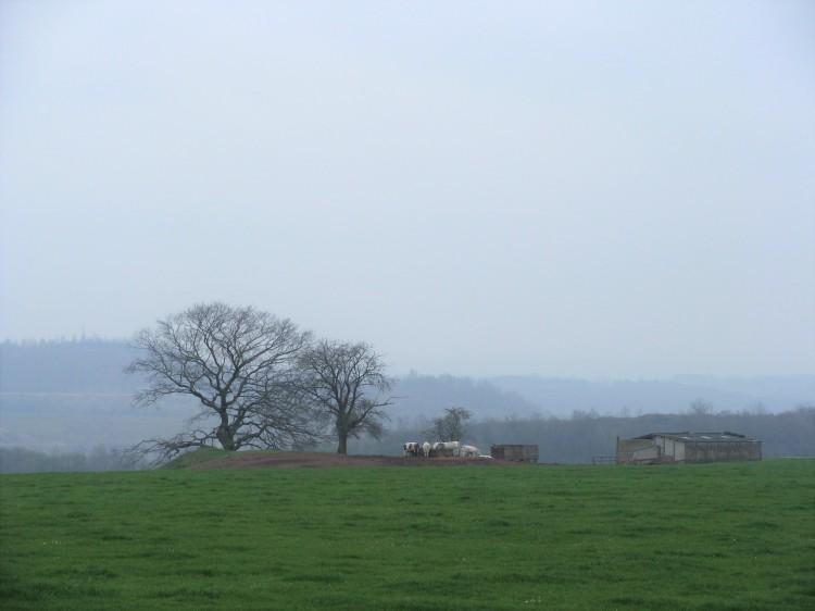 landschaft-nebel