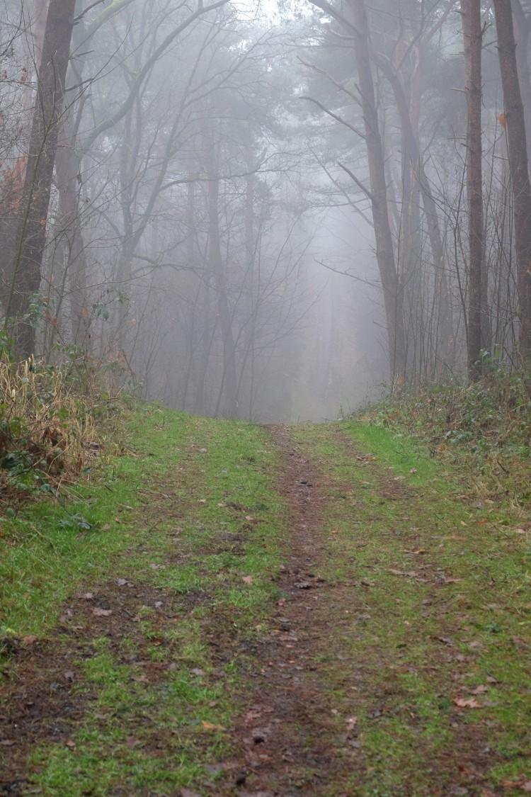 weg-wald-nebel