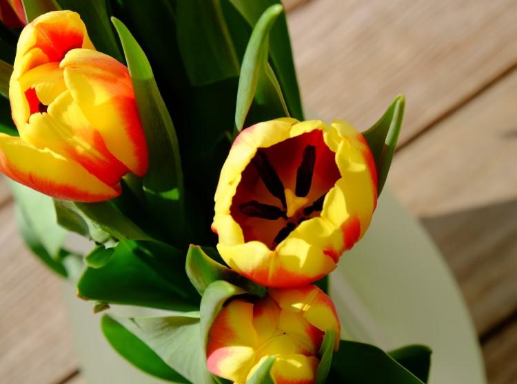 tulpen-gelb
