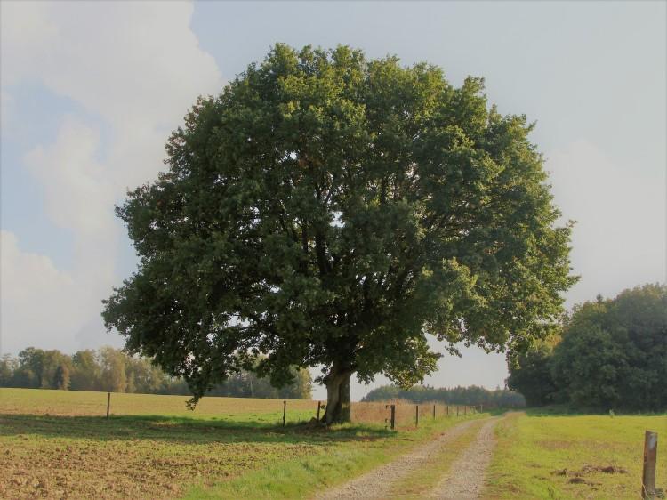 Baum Weg