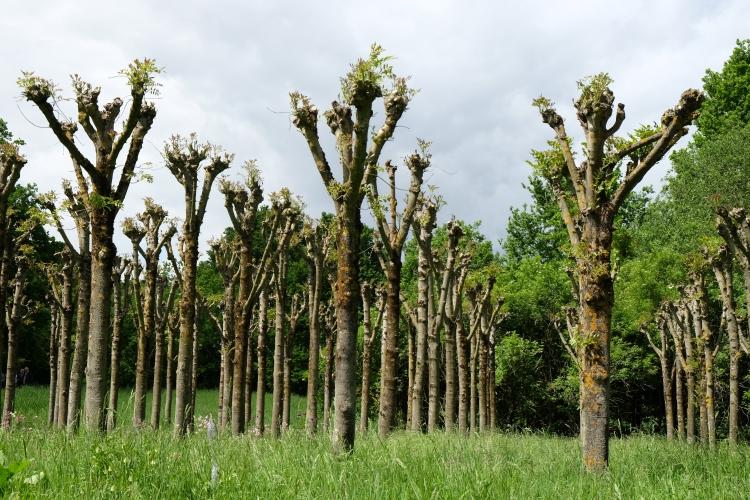 Bäume Homb