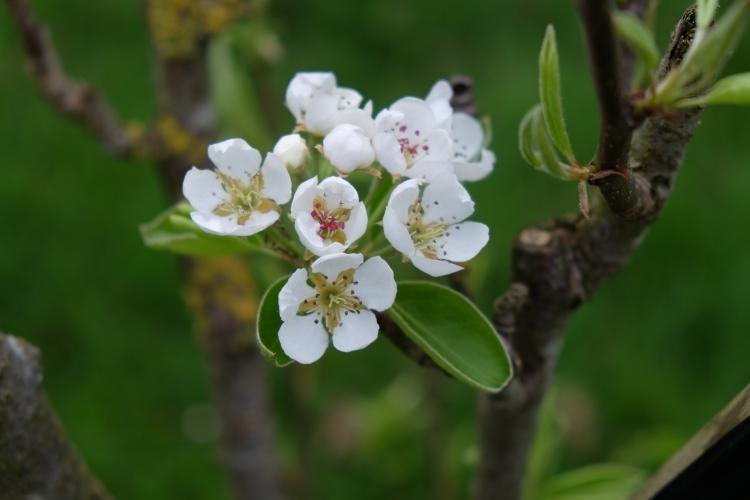 Blüte weiß A