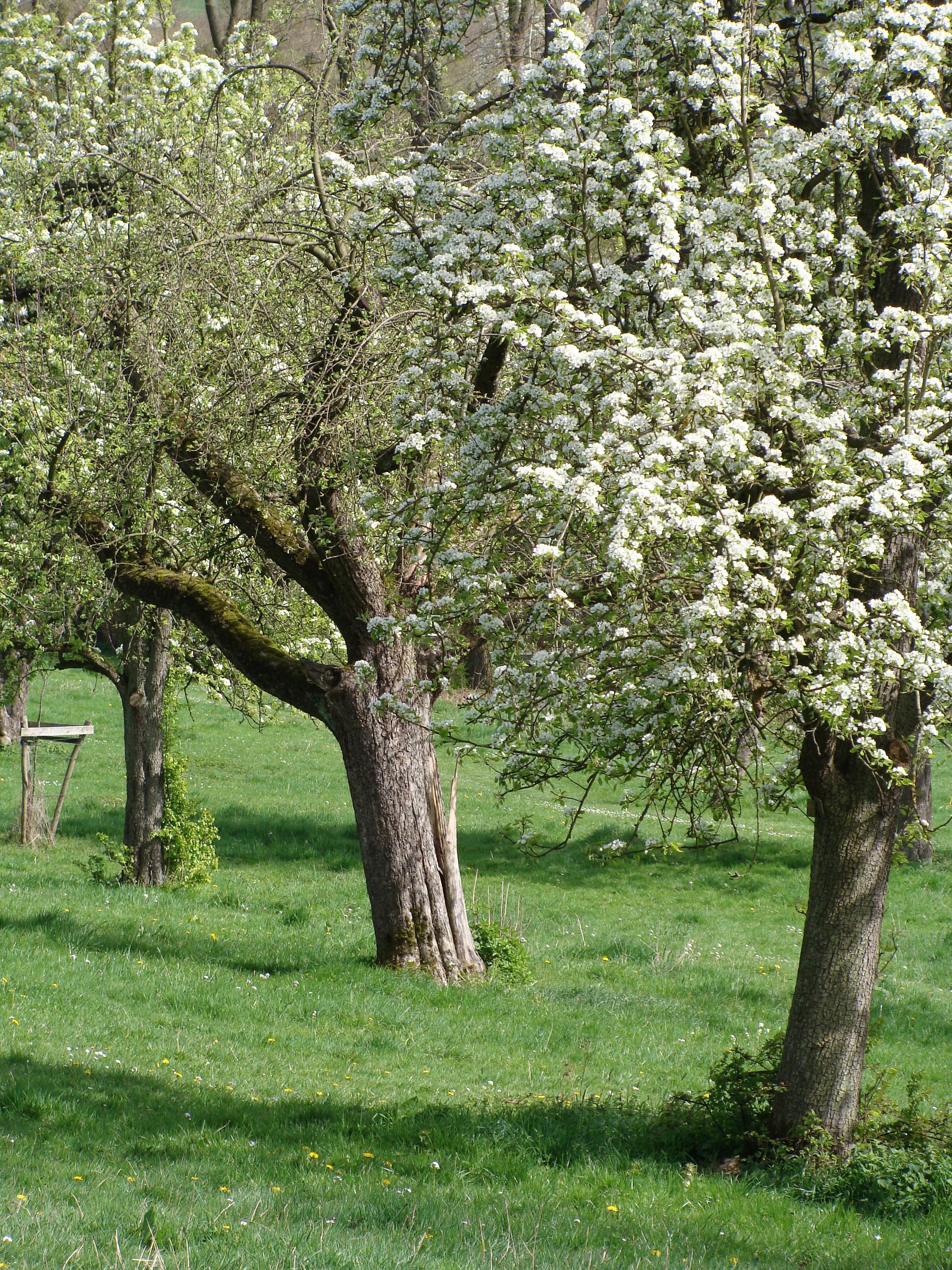 Bäume Epen