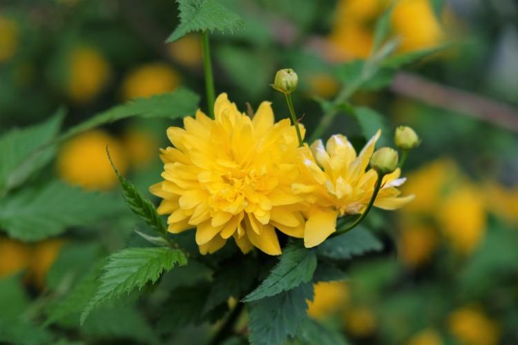 Blüten g