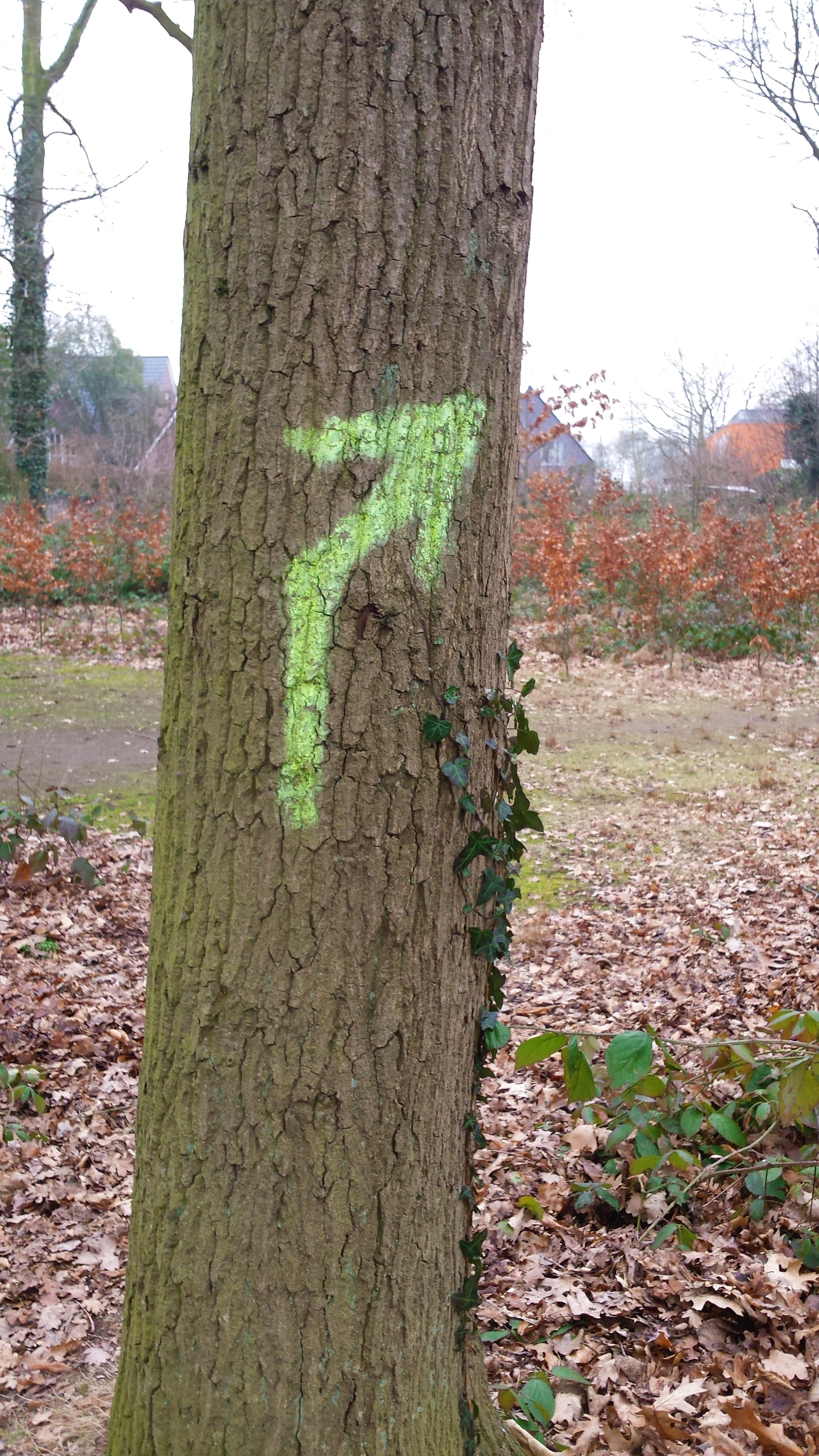 Baum Pfeil HS