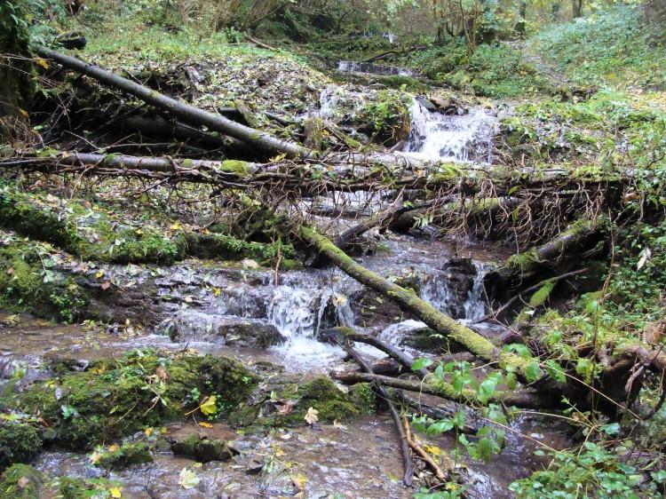 Wald Baumstamm