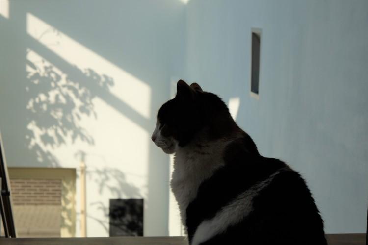 Katze L