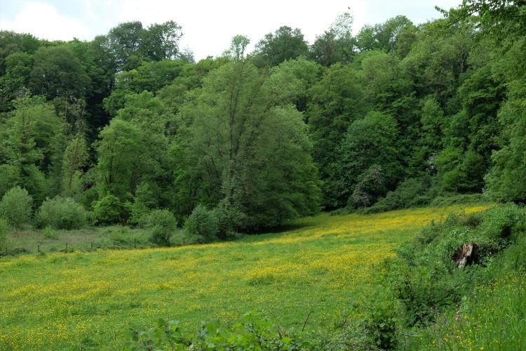 Landschaft P