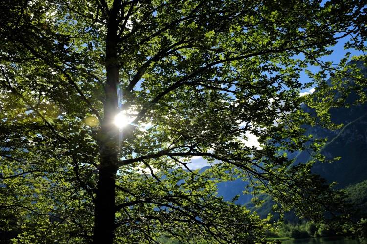Wald Sl