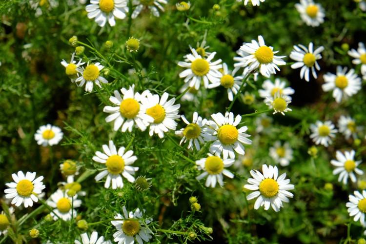Blumen Wiese N