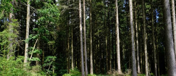 Wald B