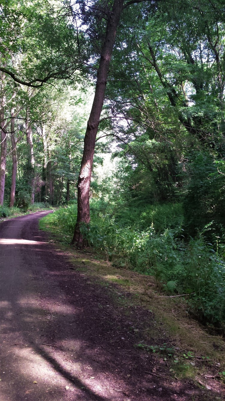 Wald Weg Kurve