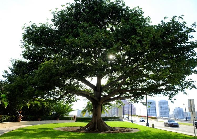 Baum Miami