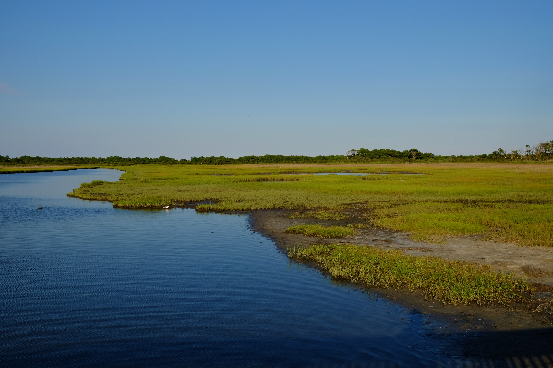 Landschaft Everglades