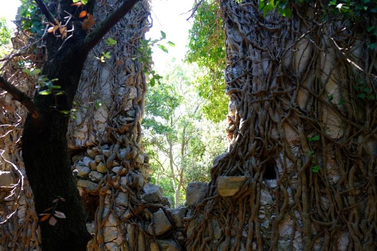 Baum Ruine K