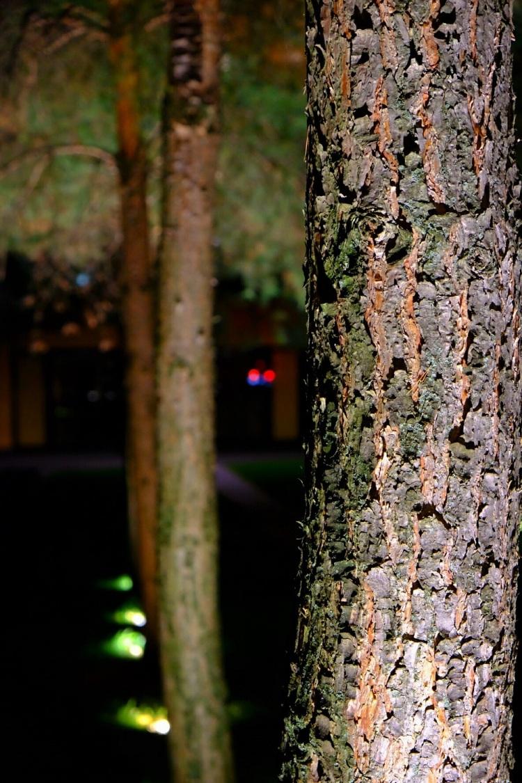 Bäume Nacht AC
