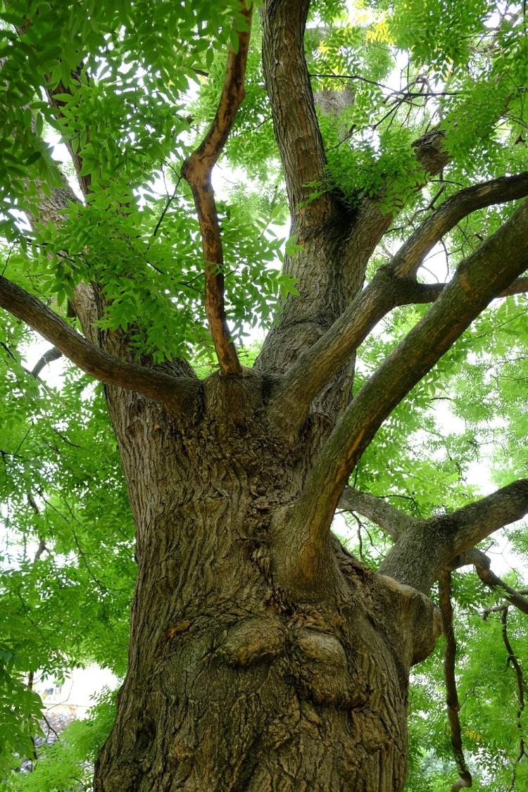 Baum M