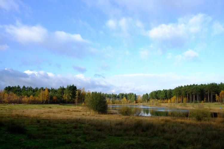 Landschaft TH