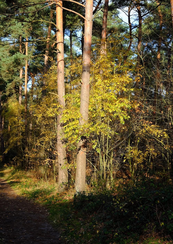 Wald Te