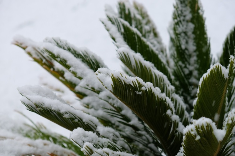 Palme Schnee
