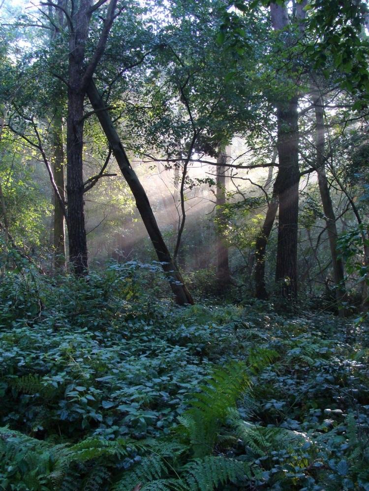 Wald Licht