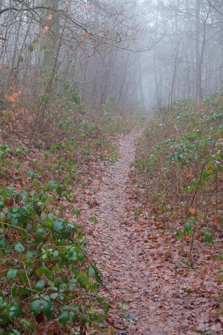 Weg Wald S