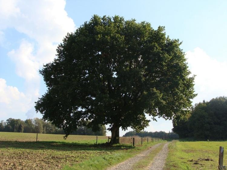 Baum Pi