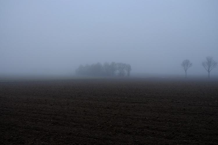 Bäume Nebel