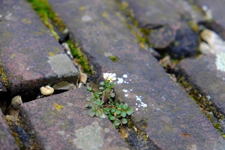 Blume Asphalt