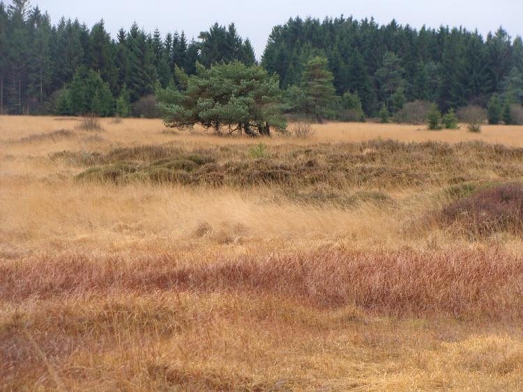 Landschaft Hohes Venn