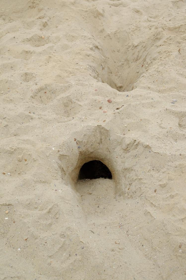 Sand Strand