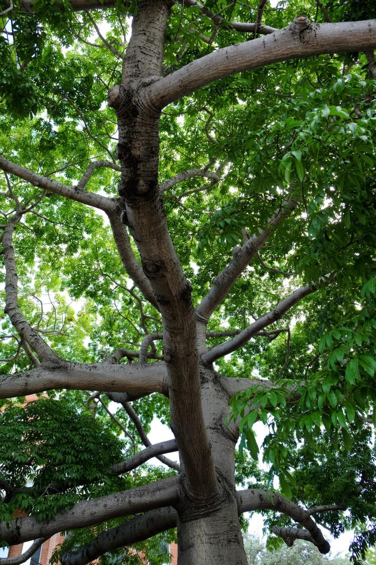 Baum A