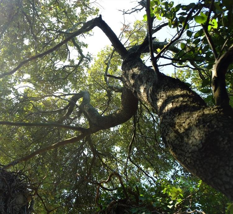 Baum unten