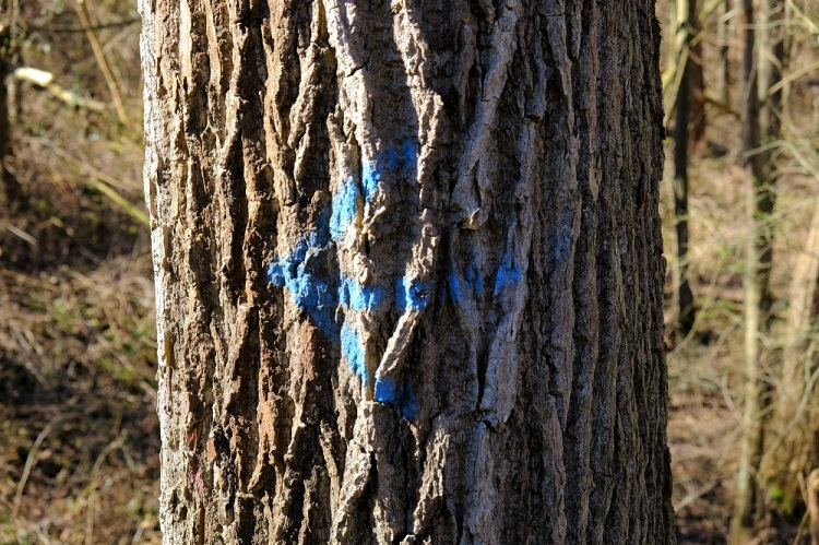 Baum Pfeil B