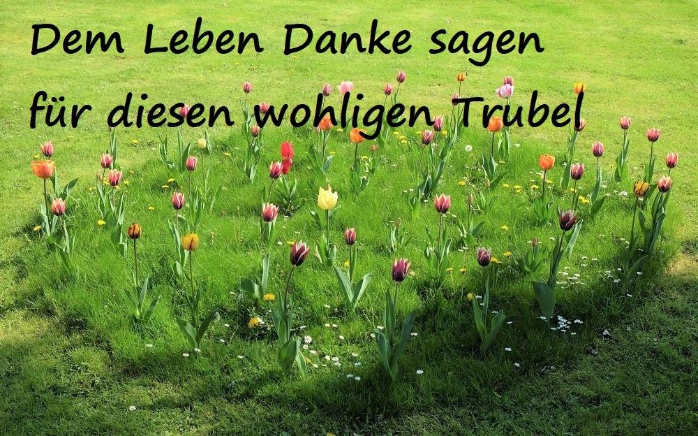 Tulpen Wiese