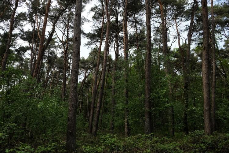 Wald Sü